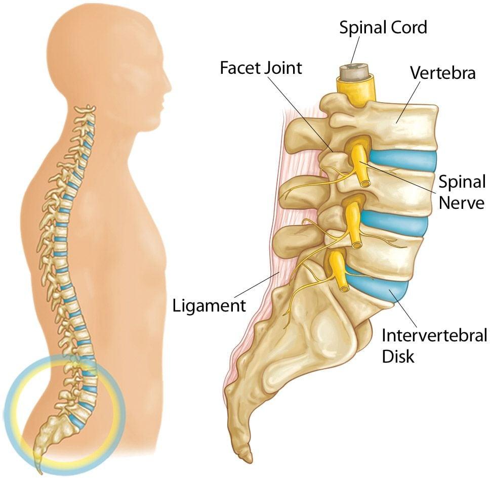 椎間盤突出-症狀與治療-腳麻-下背痛-坐骨神經痛推薦必看-脊椎由24塊椎骨組成-椎間盤為椎骨間彈性組織